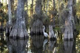 Parque Nacional de Everglades