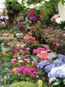 EL Mercado de las flores en Paris