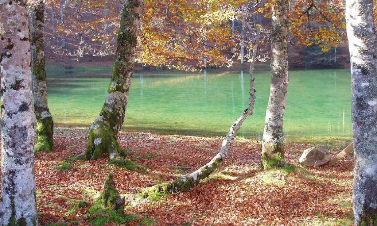 Río en la Selva de Irati