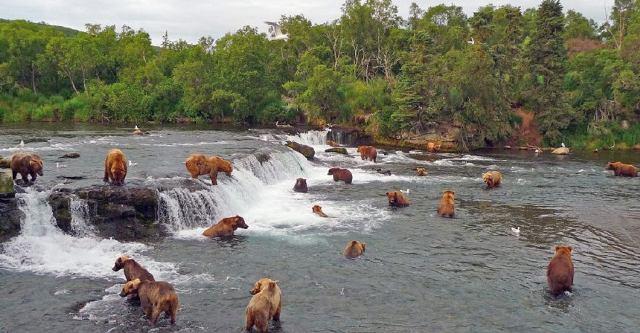 Osos en Alaska