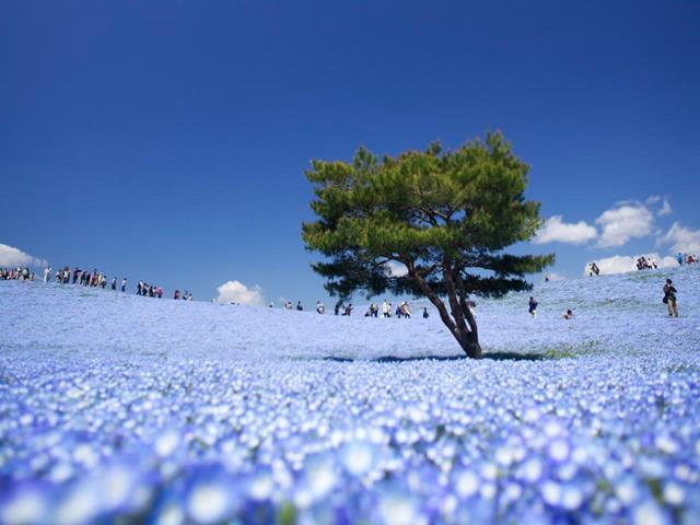 Parque nacional de Hitachi (Japón)