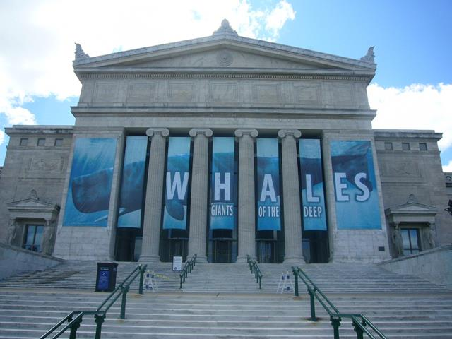 Museo de historia natural (Chicago)