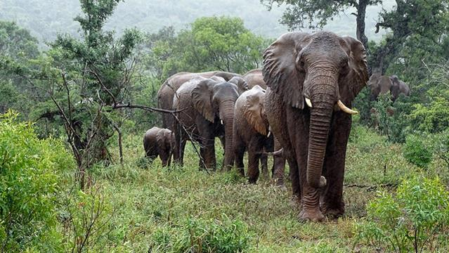 Elefantes en Sudádrica