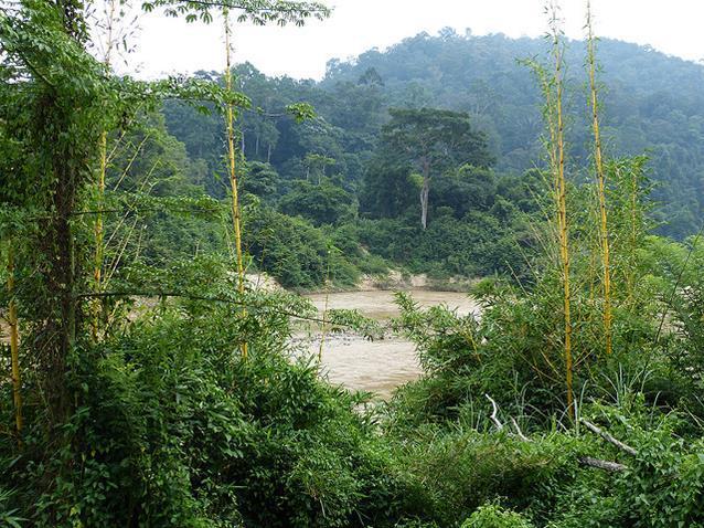 Parque Nacional Taman Negara, Malasia