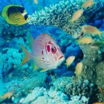Barrera de coral bajo agua 2