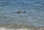 Marconi beach (focas)